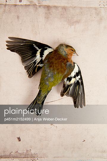 p451m2152499 by Anja Weber-Decker