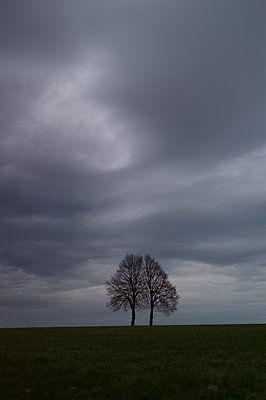 Zwei Bäume unter bedecktem Himmel - p552m1510387 von Leander Hopf