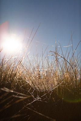 Spinnennetz - p795m1031520 von Janklein