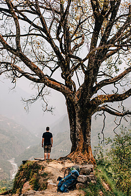Hiker beside tree on peak, Annapurna Circuit, the Himalayas, Manang, Nepal - p924m2018596 by Sara Monika