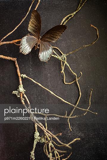 Butterfly on branch - p971m2260221 by Reilika Landen