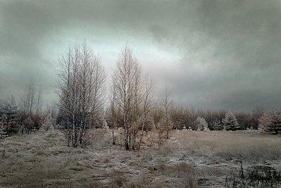 Erster Frost - p1653m2232290 von Vladimir Proshin
