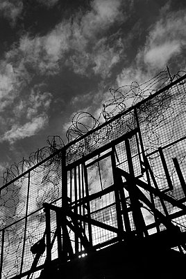 Barbed wire fence - p5970013 by Tim Robinson