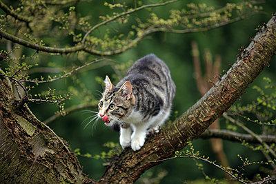 Cat on a tree - p1016m2065333 by Jochen Knobloch