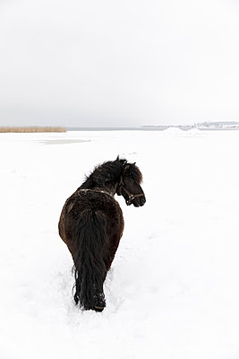 Horse in snow covered field - p352m2120082 by Åke Nyqvist