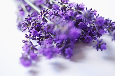 Lavender - p6692140 by Jutta Klee photography