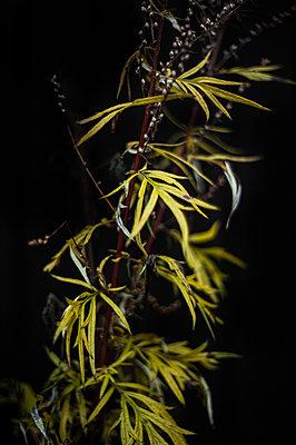 Reeds - p971m1503520 by Reilika Landen