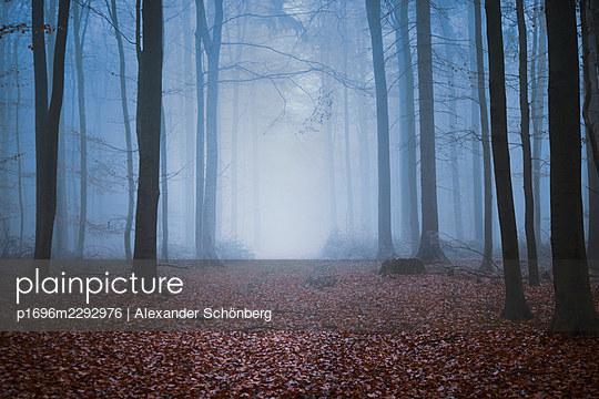 Mystical light in a forest - p1696m2292976 by Alexander Schönberg