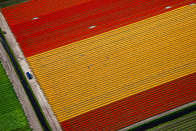 Flowerfield yellow red - p1120m948342 by Siebe Swart