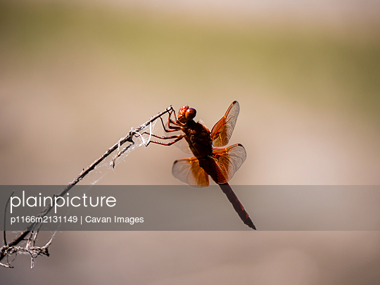 Close up of flying insect on stick - p1166m2131149 by Cavan Images