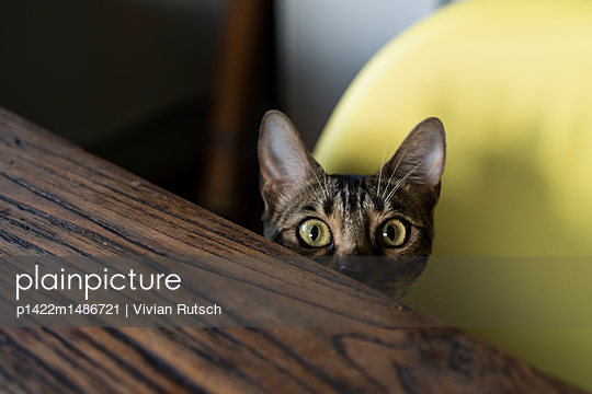 Katze am Esstisch - p1422m1486721 von Vivian Rutsch