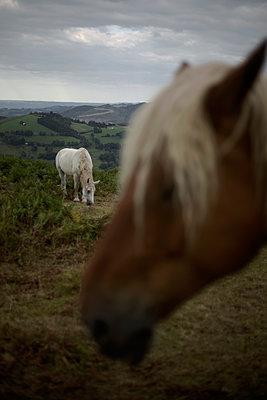 Horses, Pyrénées, France - p1028m2007746 von Jean Marmeisse