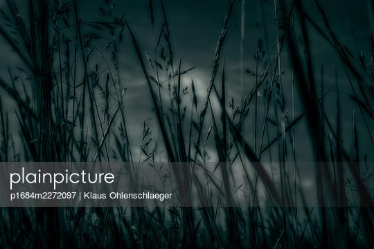 Grass in the dark - p1684m2272097 by Klaus Ohlenschlaeger