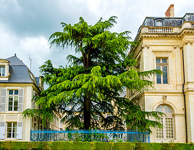 Tree surrounded by buildings - p813m1154690 by B.Jaubert