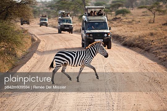 Safari - p842m939594 by Renée Del Missier