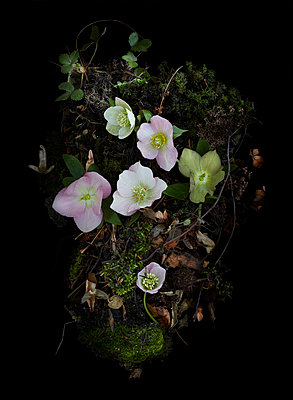 Wald - p1294m2184616 von Sabine Bungert