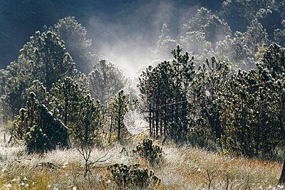 Germany, Bavaria, Upper Bavaria, Pfaffenwinkel, Steingaden, Wiesfilz, hill moor, spiderweb of a cross spider - p300m874047f by Martin Siepmann