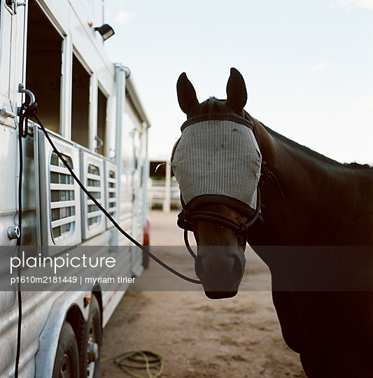 Horse wearing a protection Mask covering his eyes. - p1610m2181449 by myriam tirler