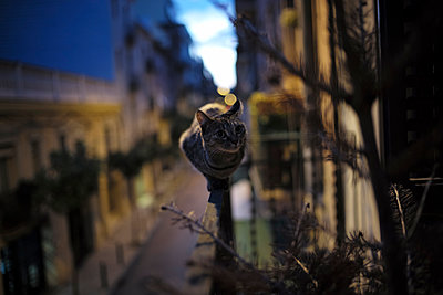 The cat in balance  - p1297m1159525 by Nathalie Seroux