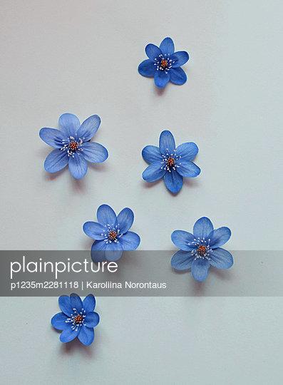 Blue - p1235m2281118 by Karoliina Norontaus