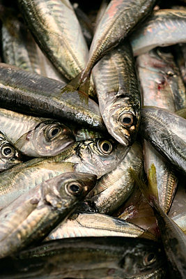Pile of Sardines - p3017134f by Marc Volk