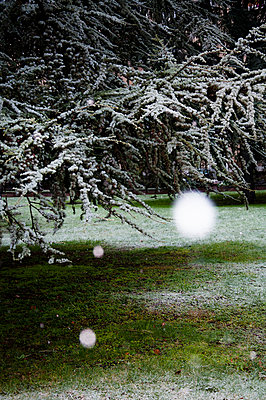 Snowflakes in the garden - p951m970847 by Caterina Sansone