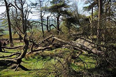 Twisted Forest UK - p1048m1123576 by Mark Wagner