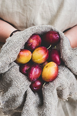 Close up of person holding fresh damsons in grey cloth. - p1100m2084899 by Mint Images