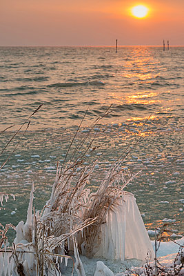 Germany, Baden-Wuerttemberg, Lake Constance, Constance, frozen shore vegetation at lake shore and wooden stakes in the sunrise - p300m2083005 von Holger Spiering