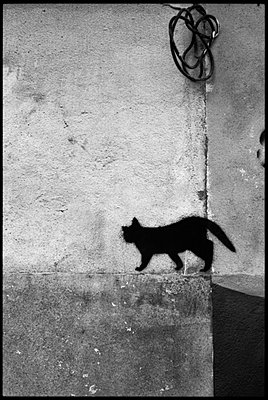 Black cat - p9510039 by Caterina Sansone