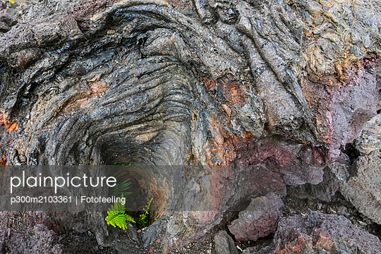 USA, Hawaii, Volcanoes National Park, fern growing on igneous rocks - p300m2103361 by Fotofeeling