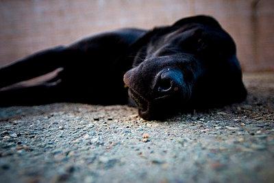 Sleepy - p3433279 by Elyse Butler