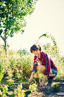 Frau pflanzt Setzlinge - p1312m1176986 von Axel Killian
