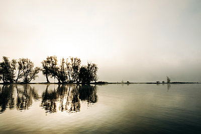 Reflection of trees in the Rhine, Germany - p713m2283540 by Florian Kresse