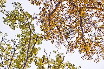 Herbstlaub, Schlosspark Nymphenburg, München, Bayern, Deutschland - p1316m1160422 von Peter von Felbert