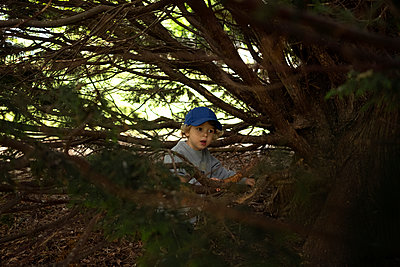 Little boy hiding between branches - p1520m2099020 by Michael Leckie