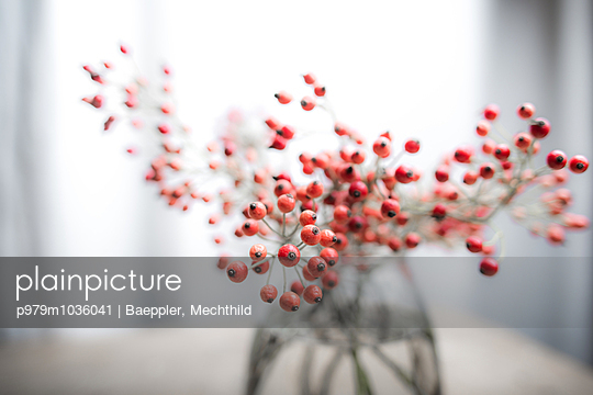 Hagebutten - p979m1036041 von Baeppler, Mechthild