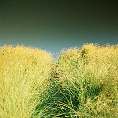 Dune grass - p6750267 by Patrick Mac Sean