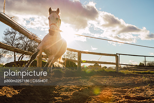 Tied up horse running by fence - p300m2257186 by CSSHOT
