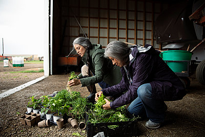 Female farmers preparing potted plants in barn on farm - p1192m2109674 by Hero Images