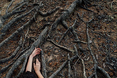 Hands and Tree Roots - p1262m1072144 by Maryanne Gobble