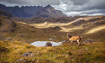 Deer in the mountains - p1234m1044588 by mathias janke