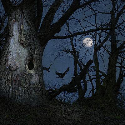 On Dark Wings - p1633m2211110 by Bernd Webler