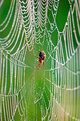 Cobweb - p324m769868 by Alexander Sommer