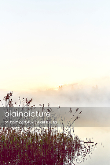 Germany, Reeds on a lake in the fog - p1312m2278437 by Axel Killian