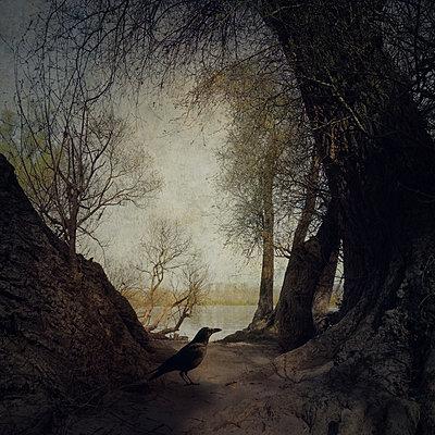 On Dark Wings Part III - p1633m2208996 by Bernd Webler