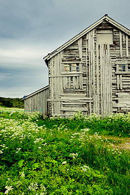 Old barn in Norway - p248m831682 by BY