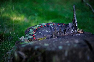 Beeren im Wald - p8290184 von Régis Domergue