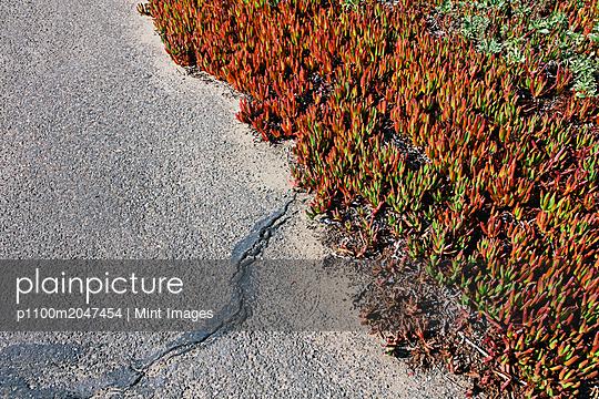 11.10.18 - p1100m2047454 by Mint Images