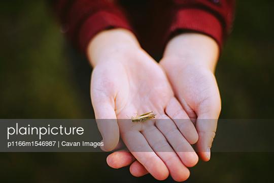p1166m1546987 von Cavan Images